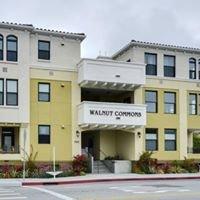 Walnut Commons