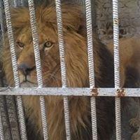 Зоопарк Кюстендил