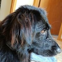 Tahoe Integrative Veterinary Care