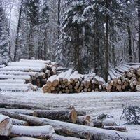 Zaun Timber Harvesting