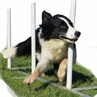 GO DOG Agility Team
