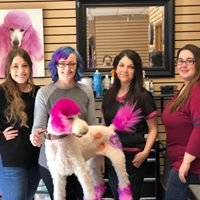 The Pink Poodle Grooming Salon