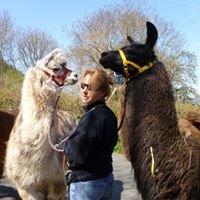 Lahn-Lamas