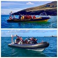 Dingle Sea Safari Tours & Fungie Up Close And personal