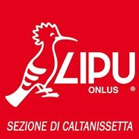 Lipu Caltanissetta