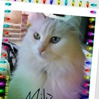 Milù (la gatta bianca  più dolce)