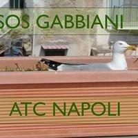 Sos Gabbiani - Atc Napoli