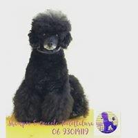 """"""" Shampoo & Coccole """" Toelettatura Professionale per Cani"""