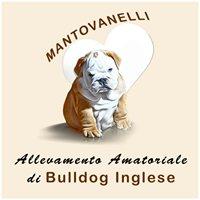 Allevamento amatoriale bulldog inglese