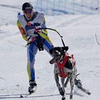 Skijoring School Training