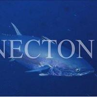 NECTON Marine Research Society