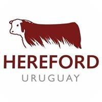 Hereford Uruguay