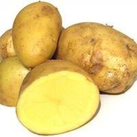 La patata di Montoggio