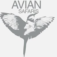 Avian Safaris