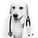 Ambulatorio Veterinario Dottoressa Silvia Gaio