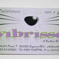 TOELETTATURA VIBRISSE