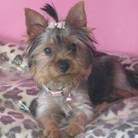 Moda. Boutique Canina Vanity Pets