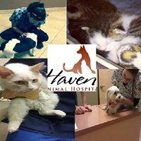 Haven Animal Hospital