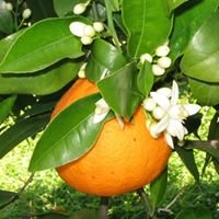 Agricortese bio