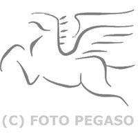 Pegaso Newsport
