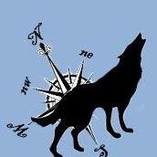 Lupi del Nord - Allevamento cane lupo cecoslovacco