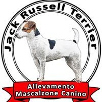 Allevamento Jack Russell Terrier Mascalzone Canino