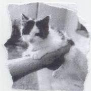 Adotta un gatto - Wancisi onlus