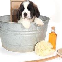 Dog In Toelettatura