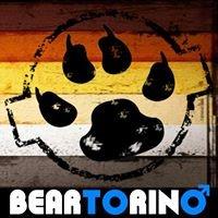 Bear Torino