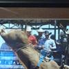 M-H Bucking Bulls