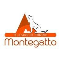 Montegatto