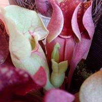 Vert-Tige Flobecq Fleurs et accessoires