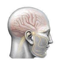 Centro di Riferimento per il Dolore Craniofacciale