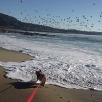Monterey, Pebble Beach  & Carmel Open House Directory