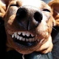 Wiggle Waggle Dog Walking - Kommetjie
