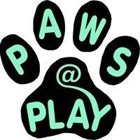 Paws At Play