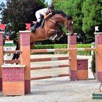 AB Sport Horses