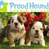 Proud Hounds Doggie Daycare