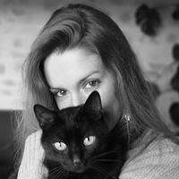 Chat Perché, arbres à chats et accessoires