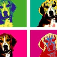 PETS A Colori