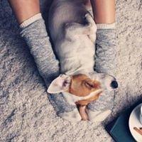 Zero Zero Setter. Negozio di Pet Food  & Pet Sitter