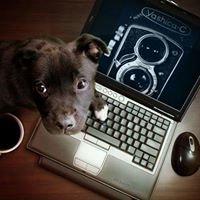 Associazione fotoreporter Siziano