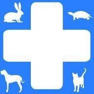 Clinica veterinaria città di sassari