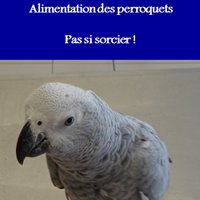Cabinet Vétérinaire aviaire Wauty
