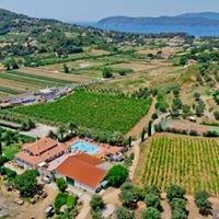Azienda Agricola Sapereta