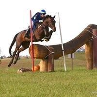 Merle-Smith Sporthorses