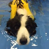 Pets Negozio e Toelettatura, piscina , beauty farm, dog sitting