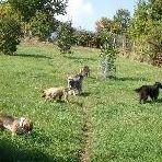 Hundepension an der Weidenmühle