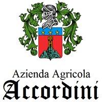 Accordini Vini