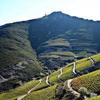 Tramontane Wines